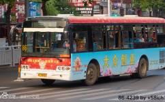 洛阳86/K86路公交车路线