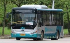 阳江7路公交车路线